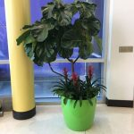 Potted plant design 3