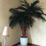 Indoor preserved palm, mall