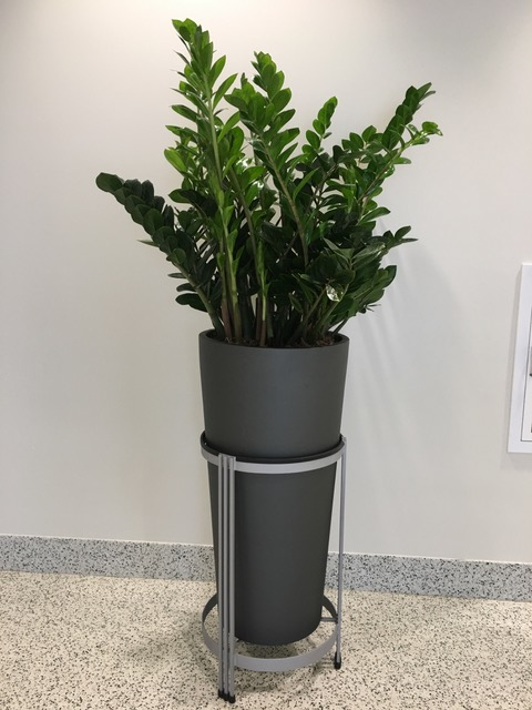 ZZ Plant in Gun Metal Planter