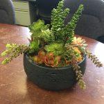 artificial succulent design (11)