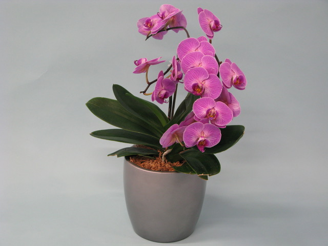 blooming plant rotation, orchid