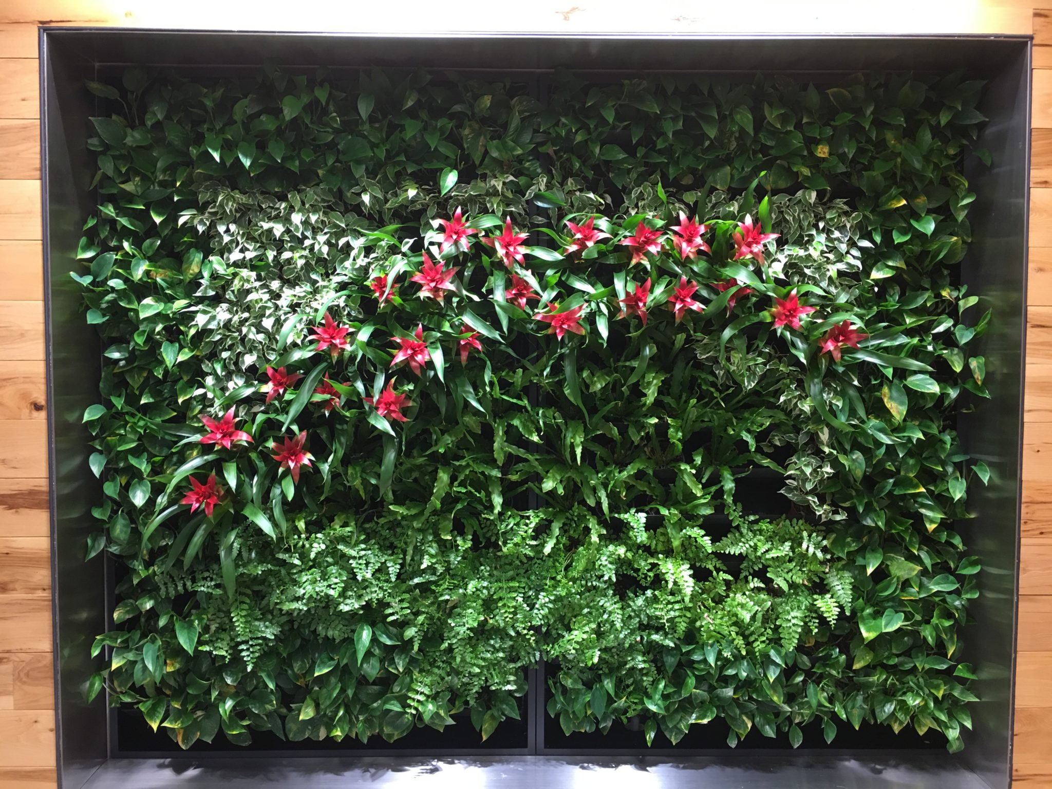 plant portrait installation