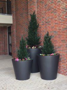 ploly-blend outdoor plants